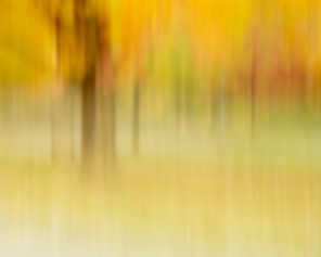 Fall for Fall - Impressionist Nature Photography