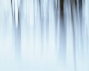 Forest Wall Art - Indefinite Winter