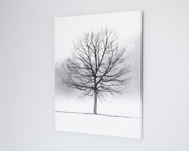 Winter Landscape Photography - Vanilla Dream - Black and White Tree