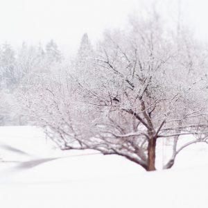 Nordic Art Print - Tangled Winter Web