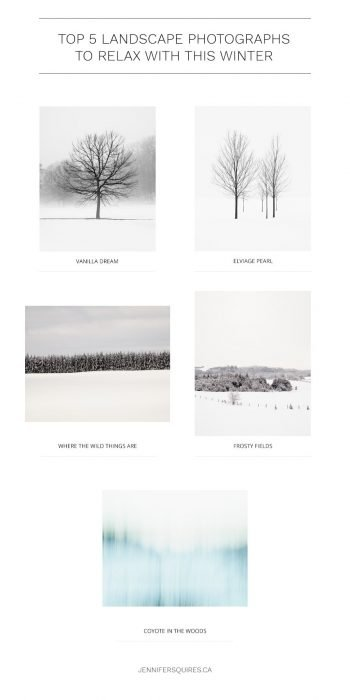 Top 5 Landscape Photographs to Relax with This Winter