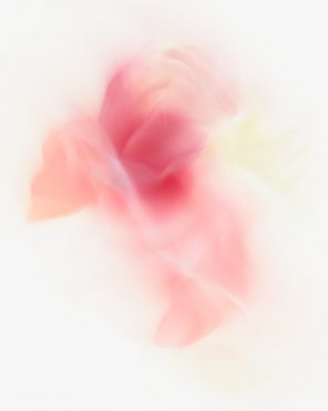 Alisha - Pink Abstract Flower Art