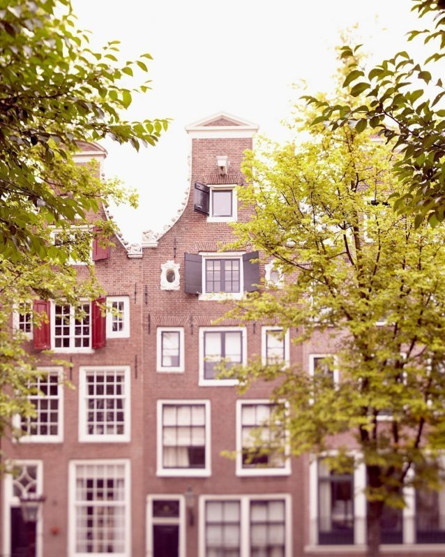 The Ox Peers Through the Trees - Amsterdam City Wall Art